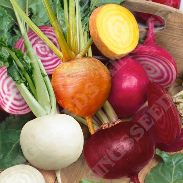 Pictorial Packet Beetroot Vegetable Kings Seeds Perpetual Spinach