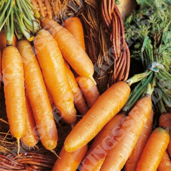 Kings Seeds Carrot Aron 400 Seeds
