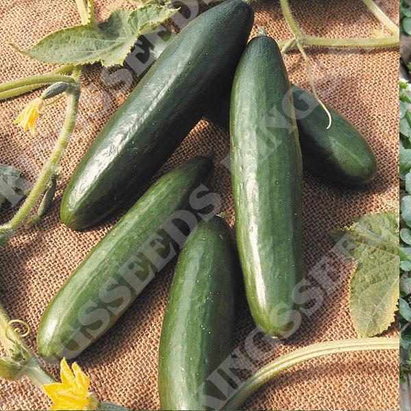 Kings Seeds - Vegetable Seeds from Kings Seeds - Kings