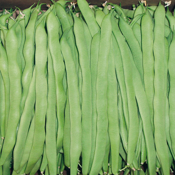 recipe: french pole beans [35]